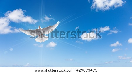 Dove in the air with wings wide open symbol of faith panoramic view - stock photo
