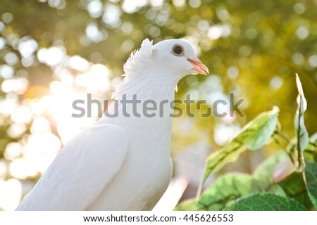 Dove on a branch close-up  - stock photo