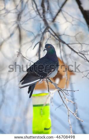 Dove sits on birdfeeder - stock photo