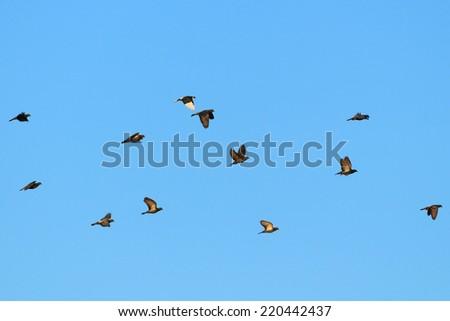 Doves fly on blue sky - stock photo