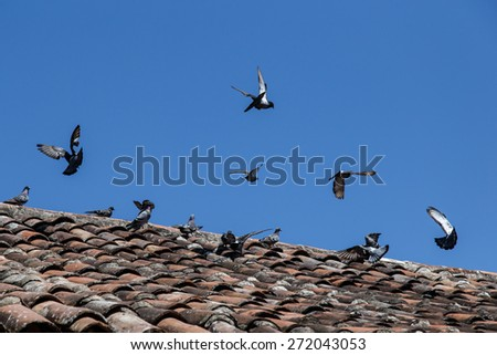 Doves flying of ceiling tile - stock photo