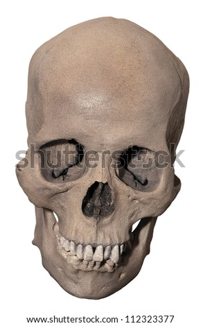Downward looking skull that gives the illusion of smiling isolated on white. - stock photo