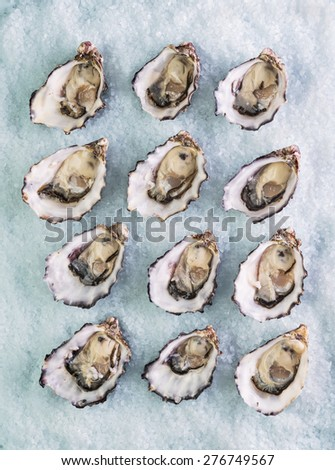 dozen fresh oysters on a sea salt top view - stock photo