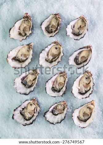 dozen fresh oysters on a sea salt top view - stock photo