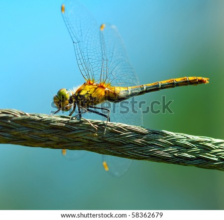 Dragon-fly - stock photo