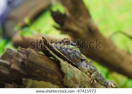 Dragon on the tree - stock photo
