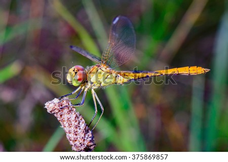 Dragonflies, insects, animals, nature, macro Dragonfly. - stock photo