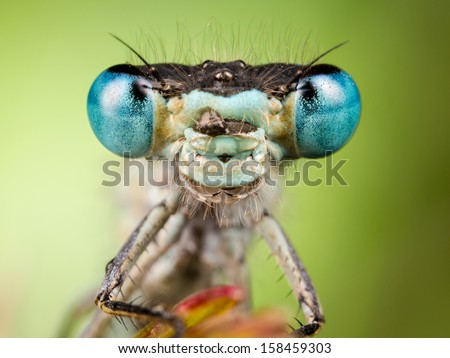Dragonfly close up, focused on head - stock photo