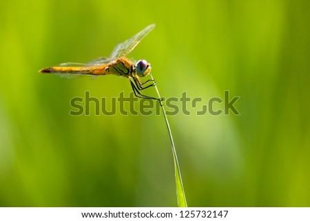 Dragonfly equilibrium - stock photo