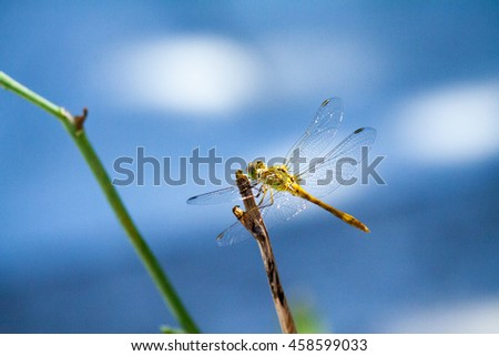 dragonfly insect predator sitting on a branch close-up shot - stock photo