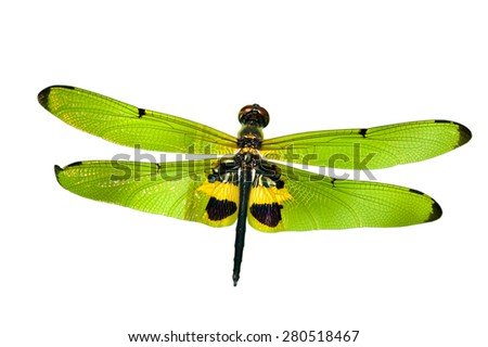 dragonfly isolated on white - stock photo
