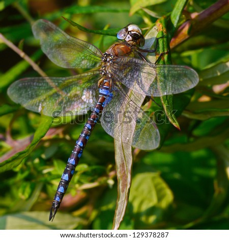 Dragonfly looking at me - stock photo