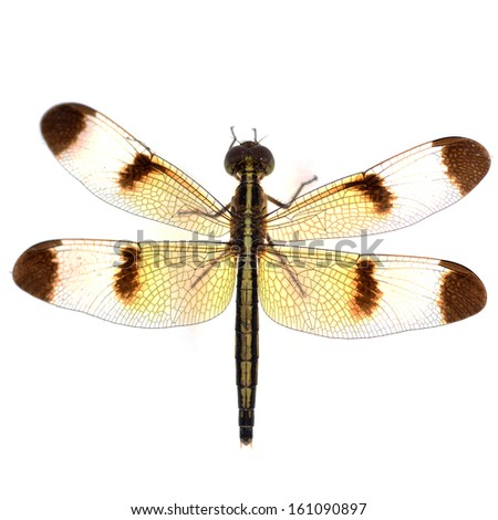 dragonfly macro isolated on white background - stock photo
