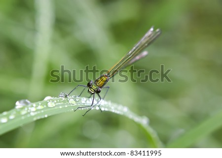 Dragonfly macro shot in nature. Shallow depth of field. - stock photo
