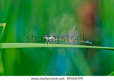 Dragonfly on a blade - stock photo