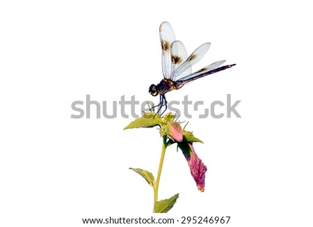 Dragonfly on plant. - stock photo
