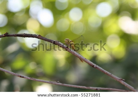 Dragonfly on the branch - stock photo
