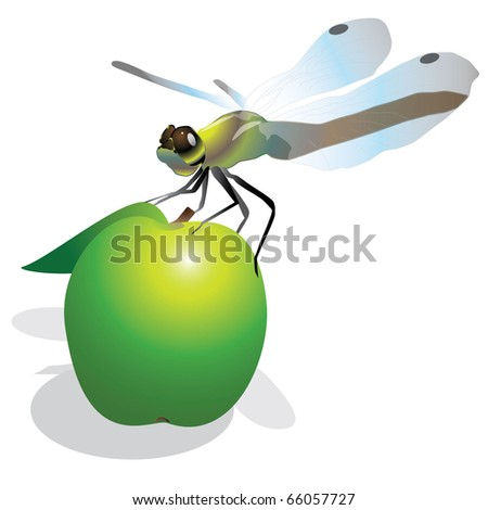Dragonfly on the green apple - stock photo