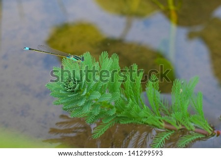 dragonfly on the plant - stock photo