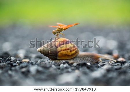 Dragonfly perched on a snail - stock photo