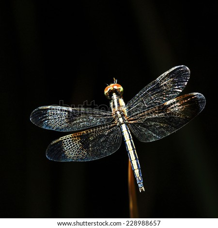 Dragonfly perched on a stick - stock photo