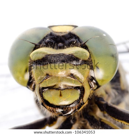 dragonfly portrait macro isolated on white - stock photo
