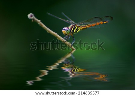 dragonfly with reflection effects - stock photo