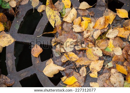 Drainage sewer manhole in the autumnal park covered with yellow leaves - stock photo