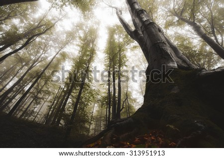 dramatic forest landscape with old tree - stock photo