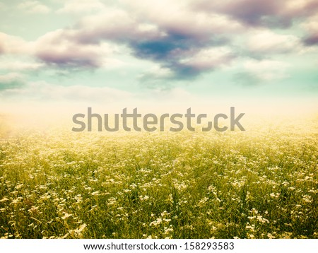 Dramatic meadow, natural landscape for your design - stock photo