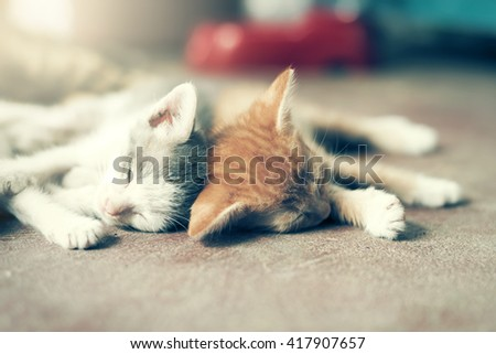 Dramatic moment A group of different kitten sleeping on the floor.In soften and selective focus. - stock photo
