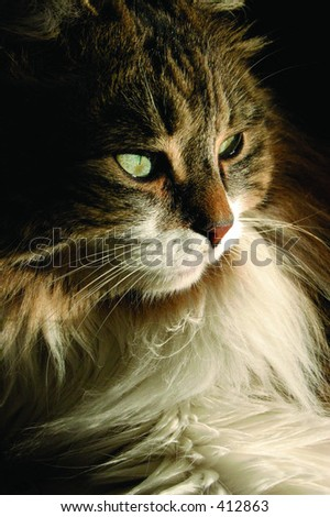 Dramatic profile of cat - stock photo