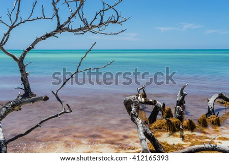 Dramatic sapless tree branches and orange seaweed at the beach under tranquil blue sky and turquoise ocean - stock photo