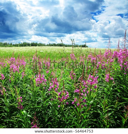 Dramatic sky and flower field. - stock photo