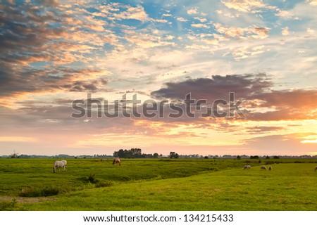 dramatic sunrise over dutch pastoral, Groningen - stock photo