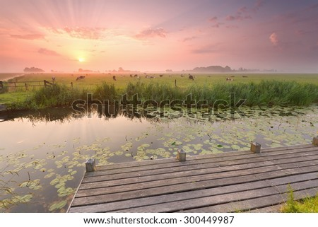 dramatic sunrise over river with pier and cattle on pasture, Netherlands - stock photo