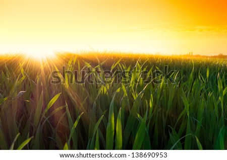 dramatic sunset with sun rays and sunbeams over a green grass field in spring - stock photo