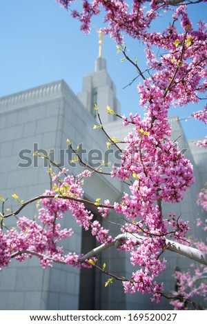 Draper, UT LDS Temple in spring with blossoms - stock photo
