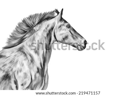 Drawing a red horse, portrait black white - stock photo