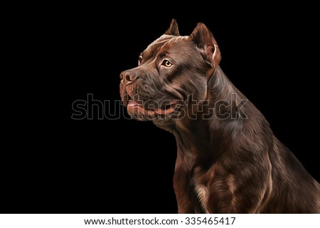 Drawing American Staffordshire Terrier portrait on a black background - stock photo