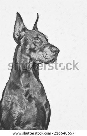 Drawing Doberman dog, black and white, pencil drawing - stock photo