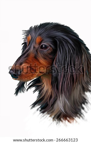 Drawing Dog breed dachshund, oil painting on a white background - stock photo