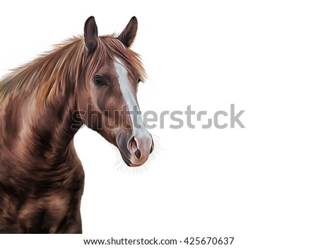 Drawing horse portrait oil painting on a white background - stock photo