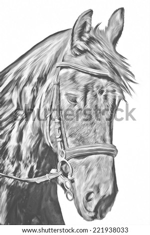 Drawing of a horse, portrait,black and white - stock photo