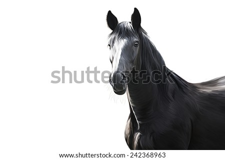 Drawing of a horse, portrait,on white background - stock photo