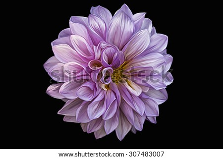 Drawing oil painting dahlia flower on a color background - stock photo