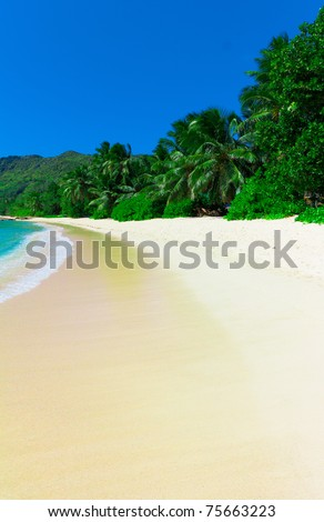 Dream Palms Jungle - stock photo
