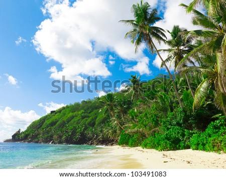 Dream Palms Landscape - stock photo
