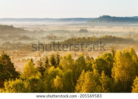 Dreamlike landscape at the Torronsuo swamp in Finland on an early morning. Distant forest covered by the fog. - stock photo