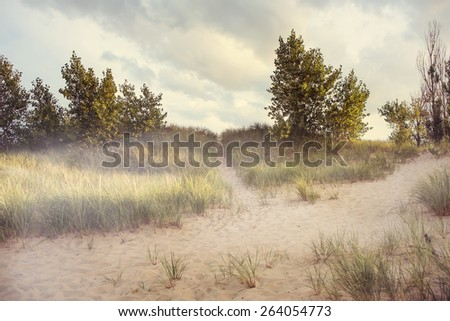 Dreamy beach path with morning fog. Some motion blur on grasses  - stock photo